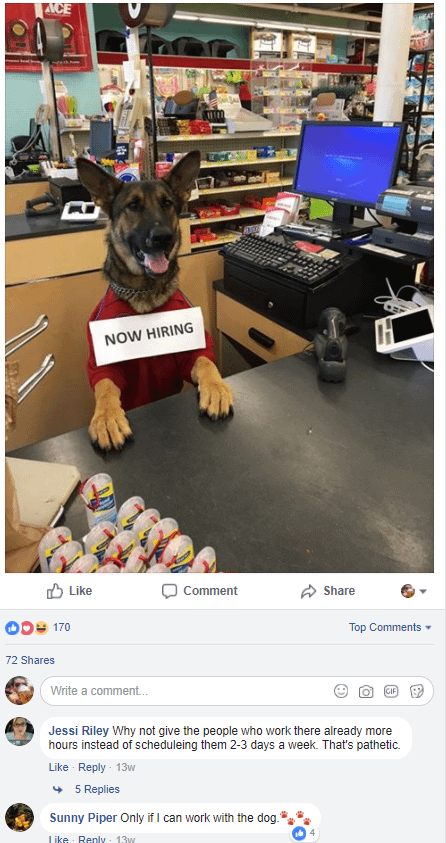 hardware store with hiring dog